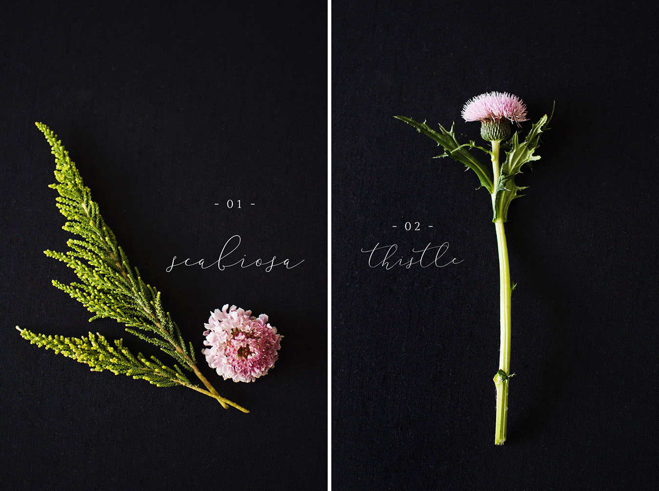 Scabiosa | Thistle Flower flat lay